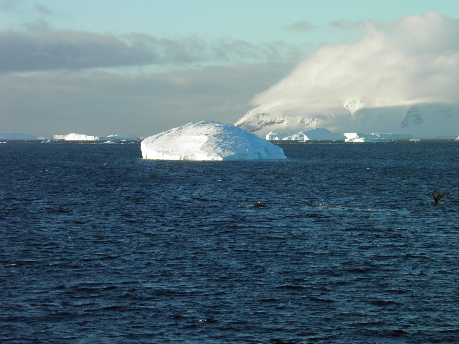 Weddell sea and deception island contrasts of past and present…